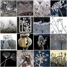 For Mosaic Monday  Frost, Snow, Ice, Seeds, Seed, Heads, Pods, Mosaic    Love Stitching Red Art Texture, Patterns In Nature, Carolyn Saxby, Creative Inspiration, Leslie Miller, St Ives, Cow Parsley, Photography Flowers, Natural Forms