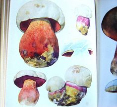 Satanic Boletus in watercolour.