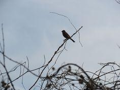鳥のシルエット. a silhouette of a bird. 16 February 2017.