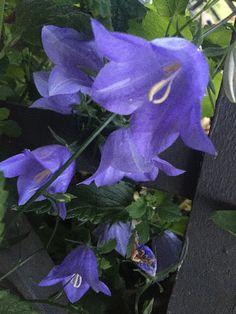 Plant Leaves, Garden, Artist, Plants, Garten, Lawn And Garden, Artists, Gardens, Plant