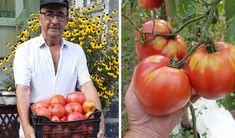 Onion, Vegetables, Cottages, Gardening, Alaska, Solar, Agriculture, Plant, Life