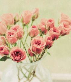 pretty in pink.  Roses. Flowers. Case. Bouquet. Pretty. Lovely. Garden.