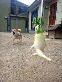 Running radish...