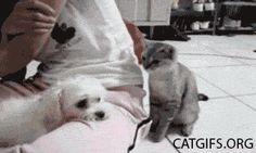 Cat and dog - best cat gifs - CATGIFS.ORG