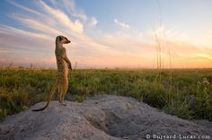 Luuurrvv this meerkat photo! Will & Matt Burrard-Lucas are brothers & photographers from the UK who aim to inspire people to celebrate and conserve the natural wonders of our planet.
