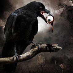 Raven with plucked eyeball in beak