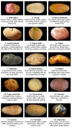 10 Health Benefits of Potatoes (SCIENTIFICALLY PROVEN) Potatoes are generally shunned by people trying to manage their weight. But do potatoes make you fat? What are the health benefits of potatoes? Cooking Tips, Cooking Recipes, Healthy Recipes, Yam Recipes, Vitamins In Potatoes, Potato Health Benefits, Types Of Potatoes, Potato Types, Gastronomia