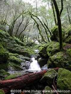 cataract falls in Marin County. one of my favorite local hikes. lush. gorgeous.