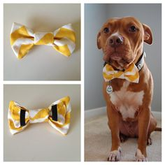 LOVE THIS!! Chevron stripes + Pitties = <3 Chevron Boys will be Boys Bow Tie Collar Accessory by PitsnPosh, $12.00 Marley needs this