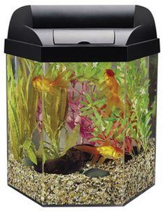 Aquaculture home starter kit 10 aquarium 1kt jaxson for Eclipse fish tank