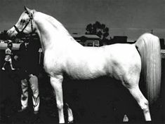 Raffles;  Raffles was a son of the Crabbet foundation sire Skowronek, out of a Skowronek daughter, Rifala.