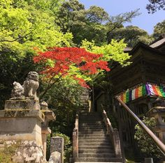 #japanese #temple #beauty