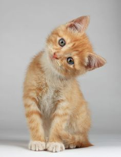 Tiny Orange Cat