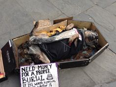 So funny.  Dog pretends to be dead and owner rakes in the money for photos! Hilarious to watch expressions of people passing by.  Only in French QuarterNew Orleans!