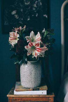 Min fredagsbukett i december med polkaamaryllis och skimmia - Volang Christmas 2019, All Things Christmas, Christmas Holidays, Xmas, Christmas Flowers, Cut Flowers, Pretty Flowers, Flower Power, Hello Winter
