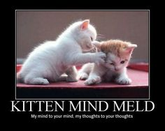 MY MIND IS EXPLODED WITH TEH CUTENESS!! Tiny kittens and Star Trek!!! D: *High pitched squeel*