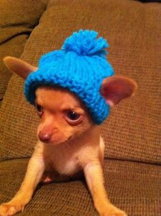 Mode voor hondjes