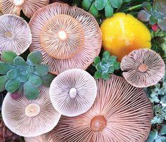 Artista cria belas composições fotografando arranjos de cogumelos | iPhoto Channel