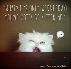 Its Only Wednesday You Got To Be Kitten Me good morning wednesday hump day wednesday quotes good morning quotes happy wednesday good morning wednesday wednesday quote happy wednesday quotes funny wednesday quotes cute wednesday quotes Funny Wednesday Memes, Wednesday Hump Day, Hump Day Humor, Happy Wednesday Quotes, Good Morning Wednesday, Wacky Wednesday, Wednesday Greetings, Saturday Humor, Wonderful Wednesday