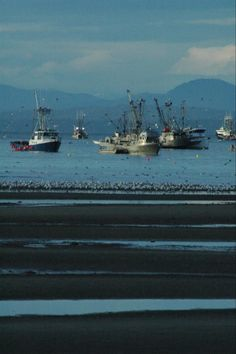 The herring run, a spectacular feast for wildlife taken just outside the Park Sands Beach Resort in Parksville. http://www.parksands.com