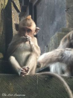 At Alas Kedaton Monkey Forest in Bali.