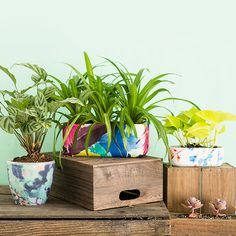 Update Your Planters for Spring With This Anthropologie Hack