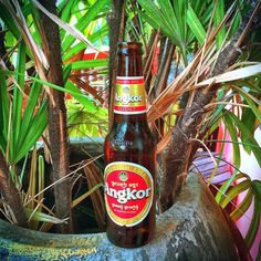 Just what the doctor ordered on a hot sticky afternoon. #angkorbeer  #cambodia #food #streetfood  #yummy #delicious #eat #streetfood #foodadventures #tastetravel #tastetravelfoodadventuretours #sunshinecoast #australia #holiday #vacation #instafood #instagood #followme #localsknow #cookingclass #foodie #foodietour #foodietravel #angkorwat #sightseeing