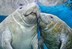 32 AWESOME Animal Photos, Guaranteed To Make You Smile. - http://www.lifebuzz.com/animals/