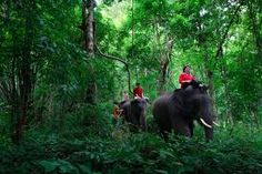 Chiang Mai Tour Package + Elephant at Work