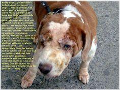 Rusty Says... Senior Dogs Need Loving Homes Too!