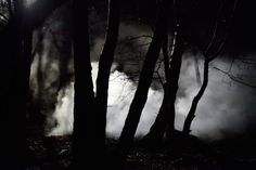 forest goldfrapp jo - Google Search