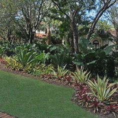 These photos of Pamela Crawford's shade gardens show the beauty of her Palm Beach landscape designs in the West Palm Beach area. Florida Landscaping, Backyard Pool Landscaping, Tropical Landscaping, Landscaping With Rocks, Front Yard Landscaping, Backyard Landscaping, Landscaping Melbourne, Landscaping Design, Tropical Garden Design
