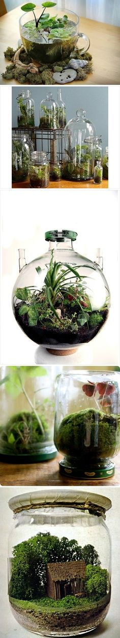 Bottle terrariums - sublime-decor.com  I'm so in love with the mini water garden.