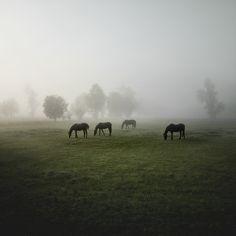 Herde by Jürgen Heckel, via Behance