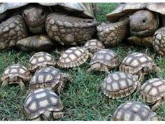 Turtles!!!!!!