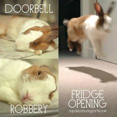 These Bunny Memes Are Soooo Cute It Will Make You Squee - World's largest collection of cat memes and other animals Funny Animal Memes, Animal Quotes, Cute Funny Animals, Funny Animal Pictures, Cute Baby Animals, Funny Cute, Cat Memes, Funny Rabbit, Pet Rabbit
