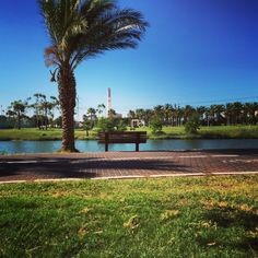 Yarkon Park, Tel Aviv. http://sucasa-tlv.tumblr.com/post/122252676930/my-view-for-the-afternoon-telaviv-summer