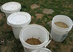 Sprouting to Enhance Poultry Feeds