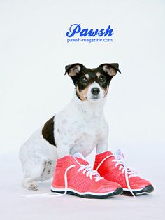 Introducing the PAWSH Print Shop from Pawsh Magazine in other for humans