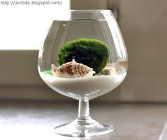 How-To: Moss Ball Water Garden #water #garden #DIY