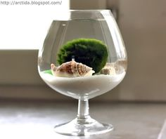 How-To: Moss Ball Water Garden #water #garden #DIY