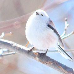 17333696 846627082142261 436967670592569344 n Cute Birds, Pretty Birds, Beautiful Birds, Animals Beautiful, Cute Baby Animals, Animals And Pets, Funny Animals, Bird Pictures, Animal Pictures