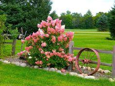 Flowers Photograph - Vanilla Strawberry Hydrangea by Randy Rosenberger