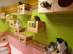Creative Decor for Cats