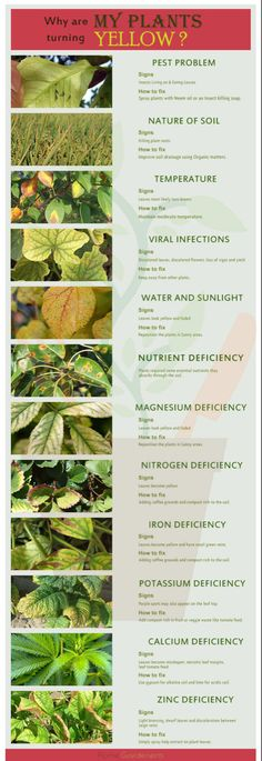 are my plants turning yellow? Why are my plants turning yellow?Why are my plants turning yellow? Vegetable Planting Guide, Indoor Vegetable Gardening, Planting Vegetables, Growing Vegetables, Organic Gardening, Gardening Tips, Balcony Gardening, Plant Growth, Plant Care
