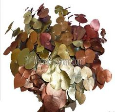 Flowers are the best way to decorate wedding venue, but to give a distinct touch eucalyptus garland can be used.  To know more about it you can visit http://wholeblossoms.com/.