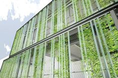 A gorgeous edible facade that doubles as a green curtain.