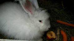 die 365 besten bilder von hasen kaninchen rabbits bunny und pets. Black Bedroom Furniture Sets. Home Design Ideas