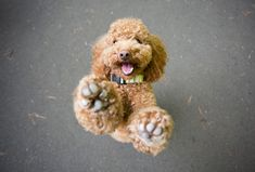 Do you want to take professional-looking photos of your dog? We asked pet photographer Mark Rogers for his best tricks for taking high-quality dog pictures--without getting into stuff like f-stops and shutter speed. Dog Photos, Dog Pictures, Animal Pictures, Family Photos, Pet Photography Tips, Animal Photography, Photography Portraits, Love Dogs, Love Pet