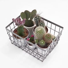cactus in a basket